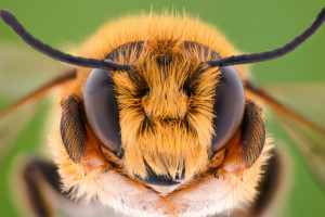 Dolnośląskie: 3 mln zł na program ratowania pszczół w regionie