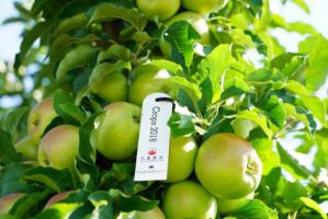 Grupa Sad Export: Ten sezon pokaże faktyczne możliwości eksportu naszych jabłek do Chin