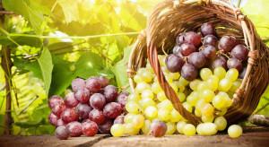 Biedronka w 2017 r. sprzedała 30 proc. więcej winogron niż rok wcześniej