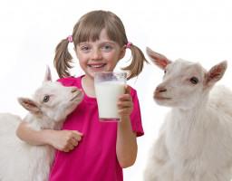Ekspert: Lotte i Spring Sheep muszą szybko wykorzystać okazję na rynku mleka alternatywnego