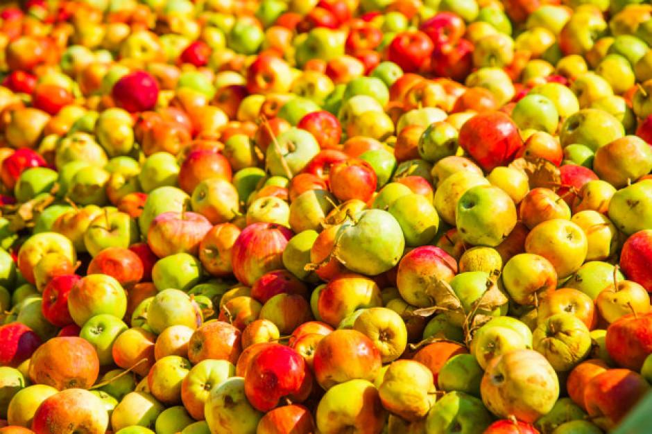 Ardanowski: Tłocznie soków nie chcą pomóc w zagospodarowaniu nadwyżek jabłek