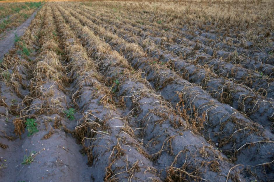 ARiMR: ok. 600 mln zł dla poszkodowanych przez suszę
