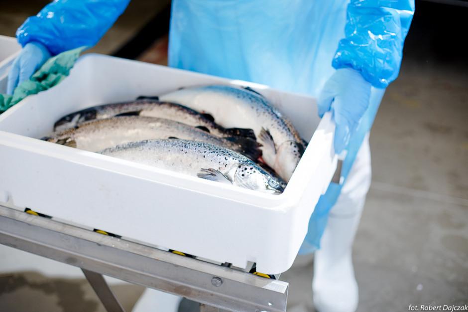 Jurassic Salmon: Chów naszego łososia musi być transparentny dla klienta