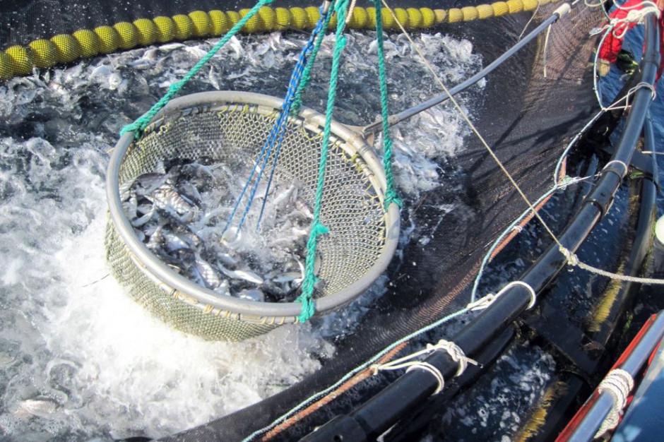 KE proponuje plan połowów ryb w 2019 r. na Atlantyku i Morzu Północnym