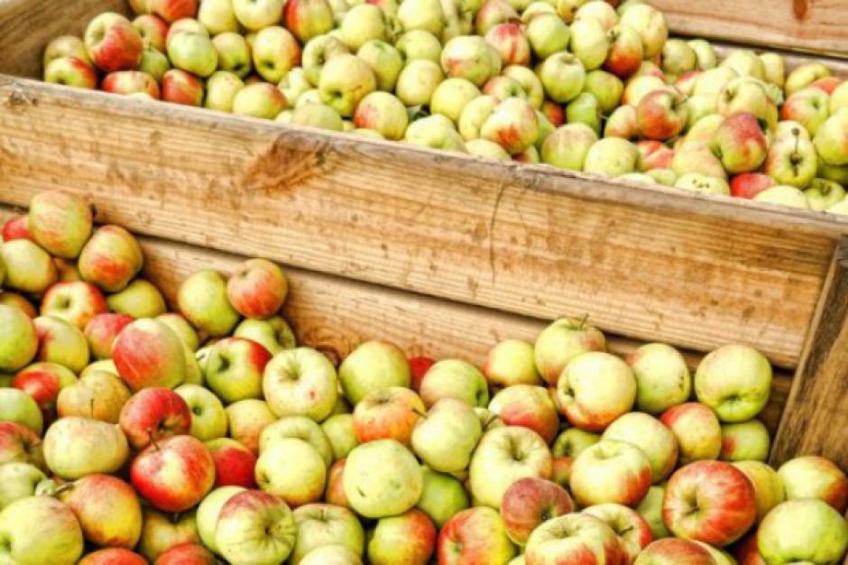 Sadownicy rozdadzą darmowe jabłka w Warszawie i Lublinie