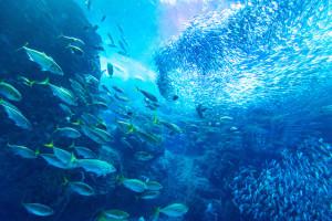 Co zrobi Rada UE w sprawie limitów połowów ryb głębinowych?
