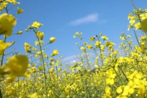 Długa, ciepła jesień to zagrożenie dla roślin ozimych