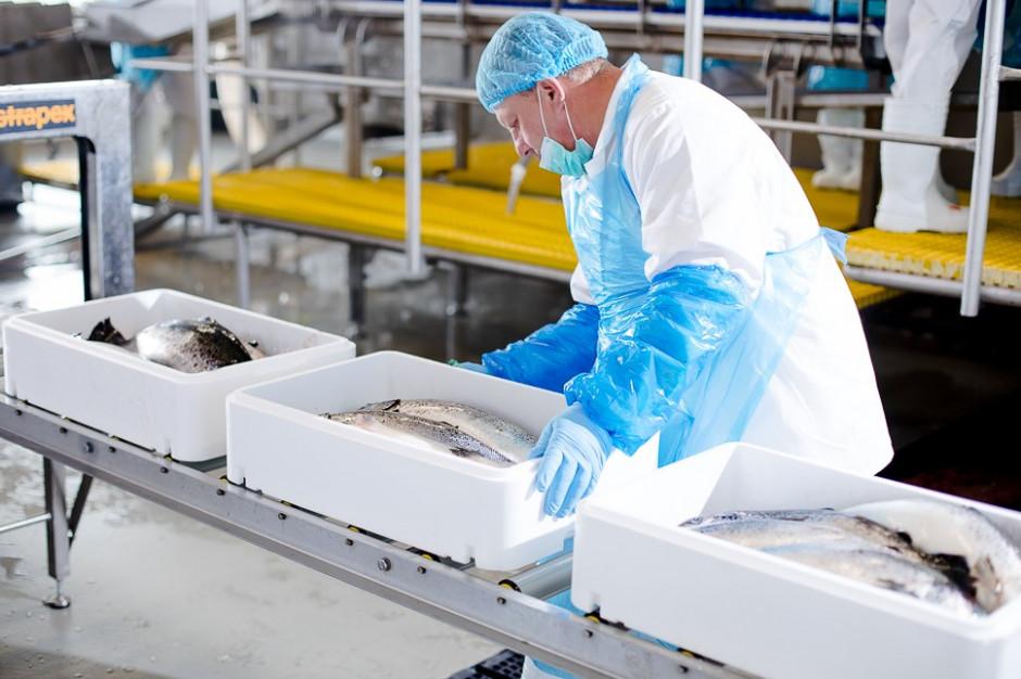 Jurassic Salmon: Chcemy stworzyć pierwszą w Polsce markę świeżej ryby hodowlanej