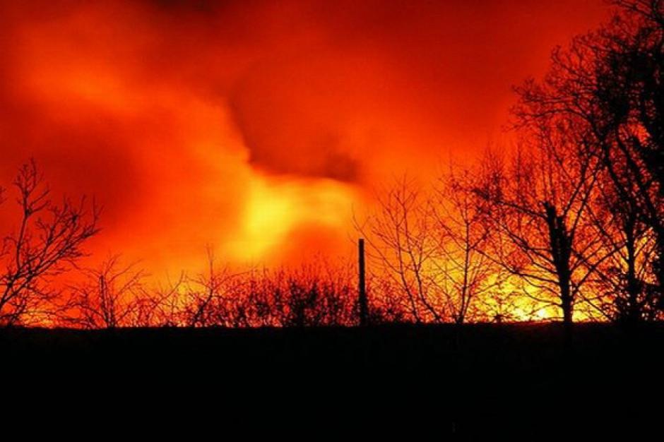 18 zastępów strażackich gasiło pożar mleczarni w Zielinie