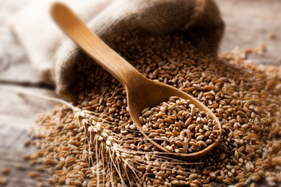 PIORiN nie stwierdził zagrożenia fitosanitarnego zbóż sprowadzanych z Ukrainy