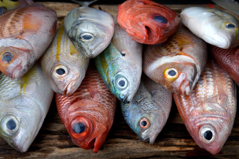 PSPR: Certyfikaty są dużym obciążeniem dla branży rybnej, a ich efekty są mizerne