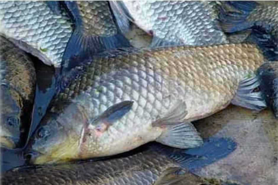 Górnośląskie Przedsiębiorstwo Wodociągów rozpoczęło rybackie żniwa