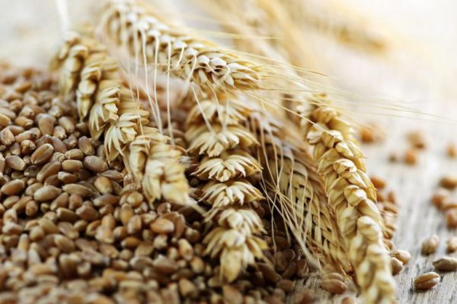 Polska pszenica ma otwarte drzwi na rynek meksykański