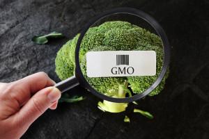 Nobliści: Należy złagodzić ograniczenia dotyczące GMO