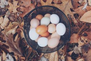 Fermy Woźniak: Białe jaja nie są wcale gorsze od brązowych