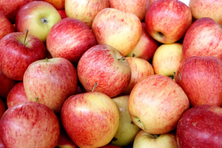 Rośnie unijny eksport jabłek do Chin