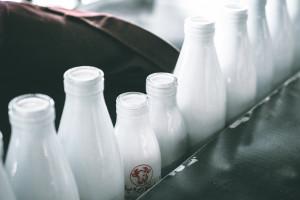 Milkpol: w listopadzie spadły przychody spółki, spadła też cena skupu mleka