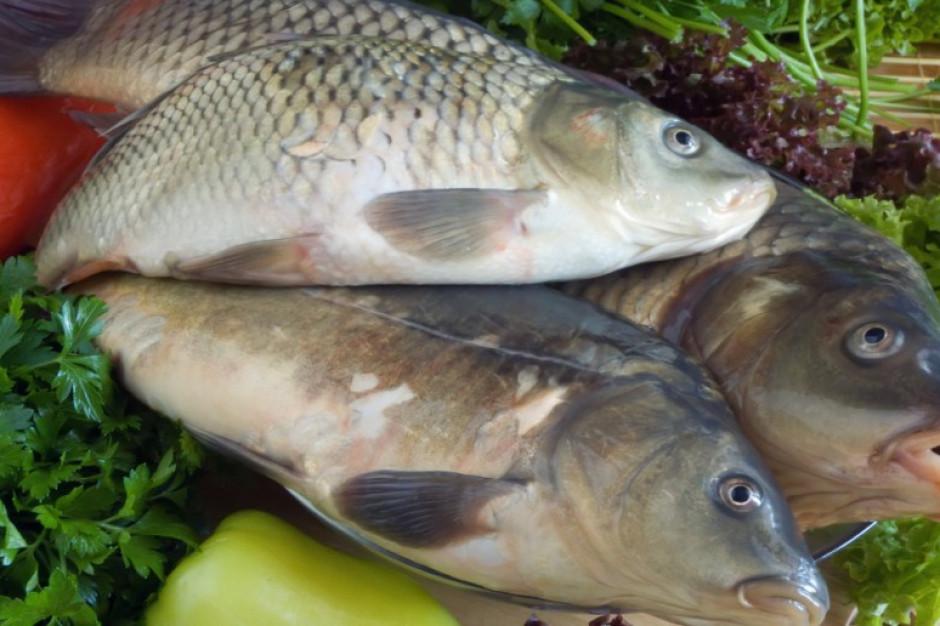Ekspert: Karp to jedna z najlepszych jakościowo ryb hodowlanych w Polsce