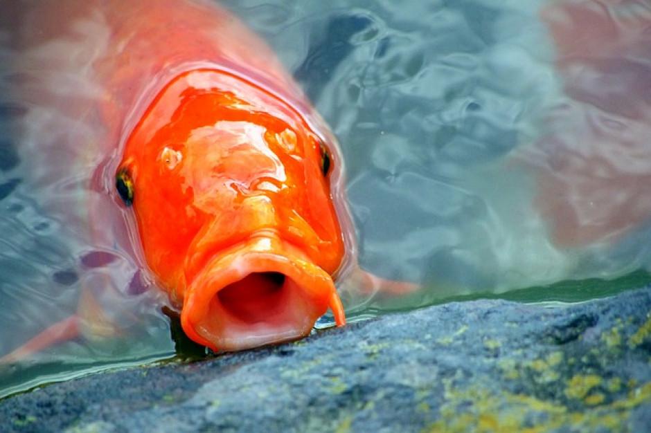 Dziś, 20 grudnia, jest Dzień Ryby