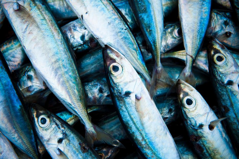 Co dziewiąty przetwórca ryb jest niesolidnym kontrahentem (analiza BIG InfoMonitor)