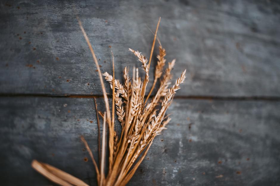KOWR: Do końca I kwartału 2019 ceny zbóż będą wyższe - nawet o 1/3 rdr