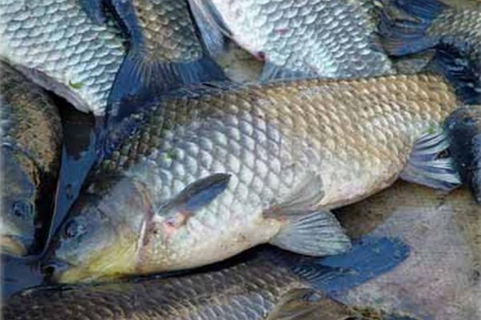 Resort rolnictwa wypowiada się ws. wytycznych dot. przenoszenia żywych ryb