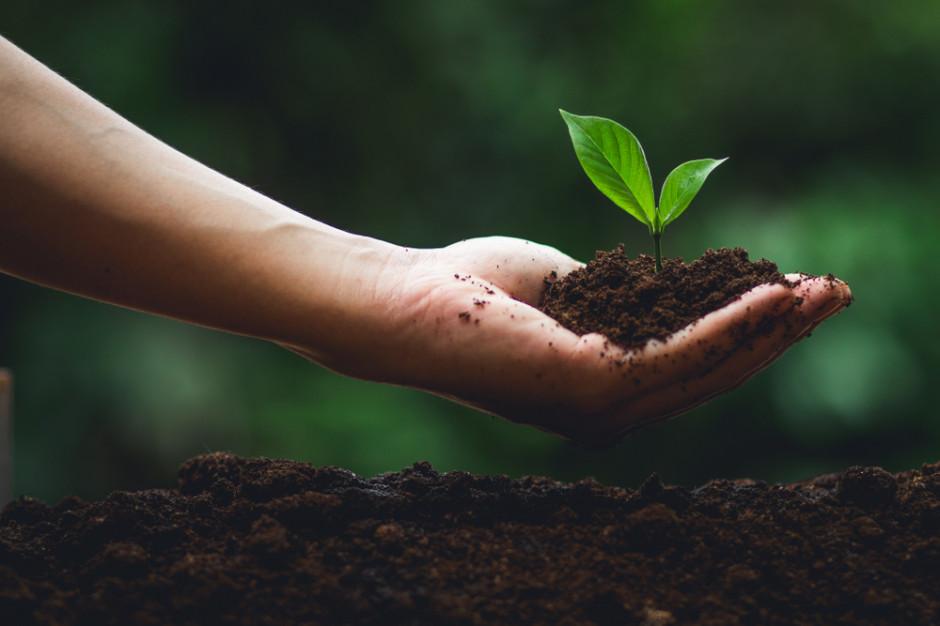 2020 r. ustanowiony Międzynarodowym Rokiem Zdrowia Roślin