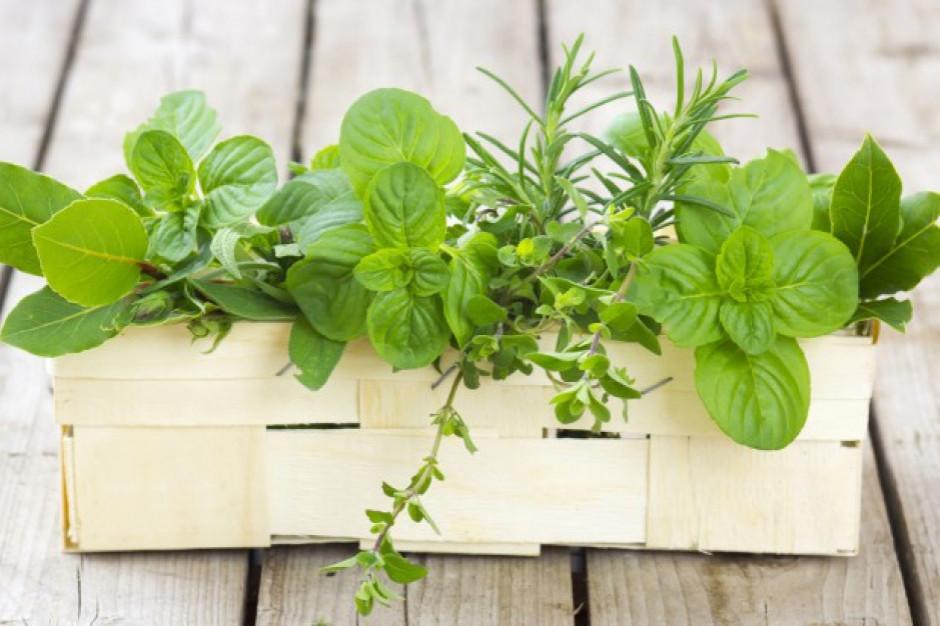 Greenvit rusza z budową zakładu produkującego ekstrakty roślinne