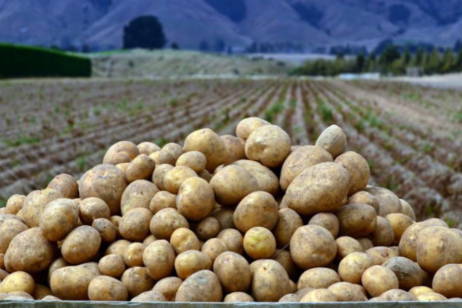 Ocieplenie klimatu oznacza mniejsze plony ziemniaków