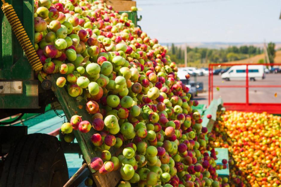 Eskimos zadowolony z efektów programu stabilizacji cen na rynku jabłek