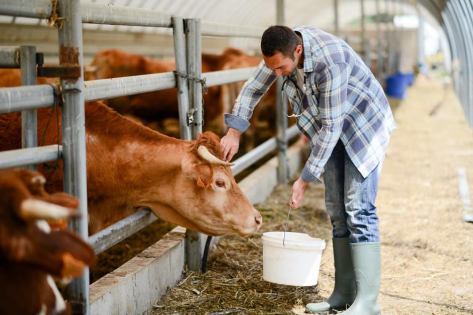 PZPBM zapowiada działania mające ułatwić zagospodarowanie bydła pourazowego