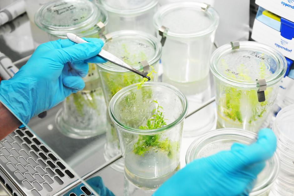 UPW prowadzi badania roślin-afrodyzjaków