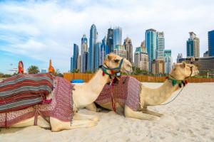 Ardanowski: Zjednoczone Emiraty Arabskie chętnie kupią od Polski żywność, ale wysokiej jakości