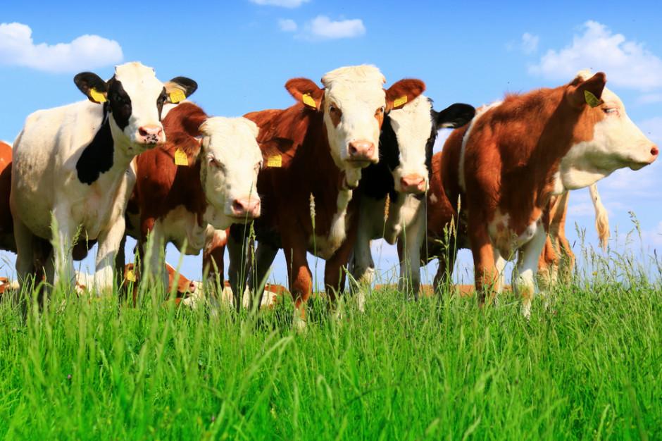Ukraina wprowadziła ograniczenia w imporcie bydła z Polski