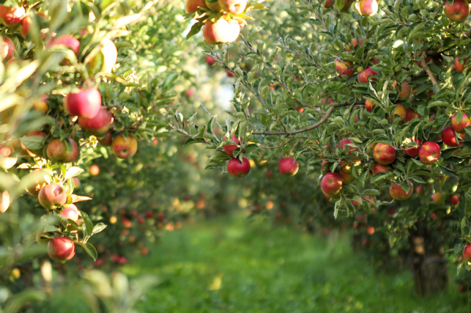 W Białymstoku powstanie sad edukacyjny ze starymi odmianami owoców