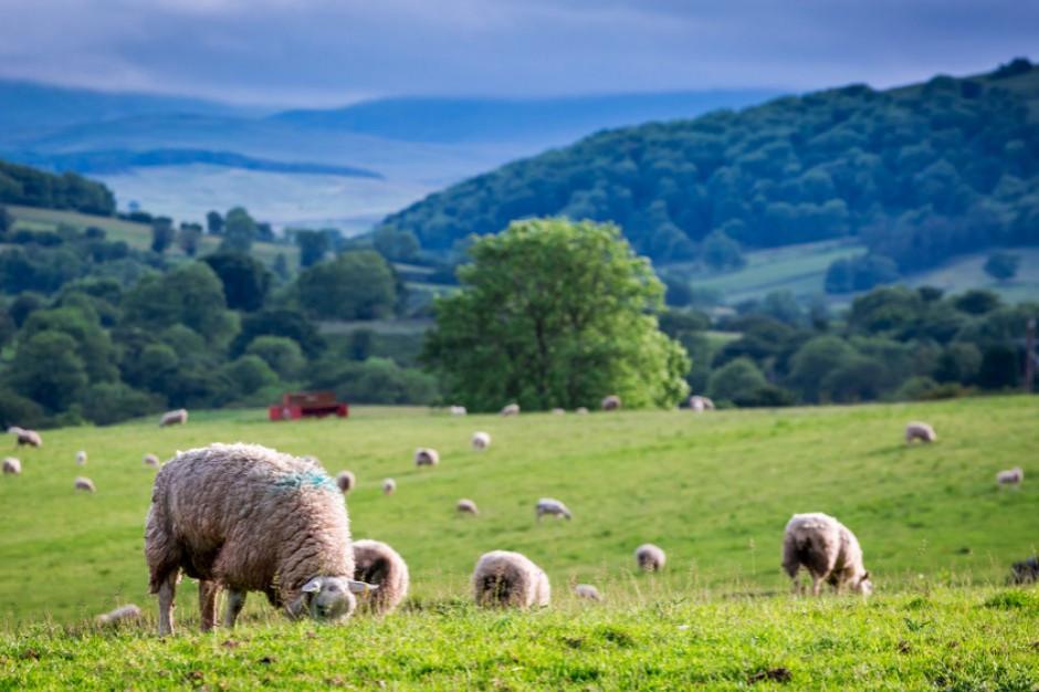 Włochy: Mafia w rolnictwie i sektorze żywnościowym