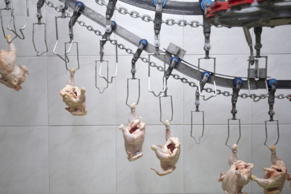 USA domagają się od Wielkiej Brytanii zgody na wwóz chlorowanych kurczaków