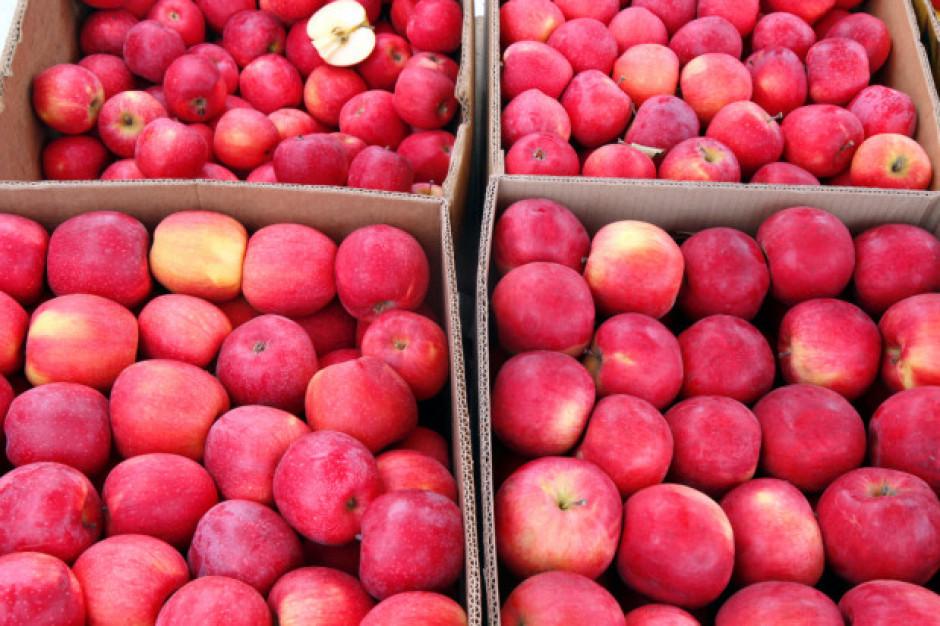 Sadownicy protestują. Rozsypali jabłka na ulicach Warszawy i Góry Kalwarii
