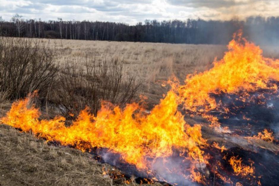 Podkarpackie: Ponad 1600 pożarów spowodowanych wypalaniem suchych traw