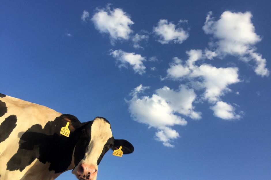 Rola sektora mleczarskiego w emisji gazów cieplarnianych