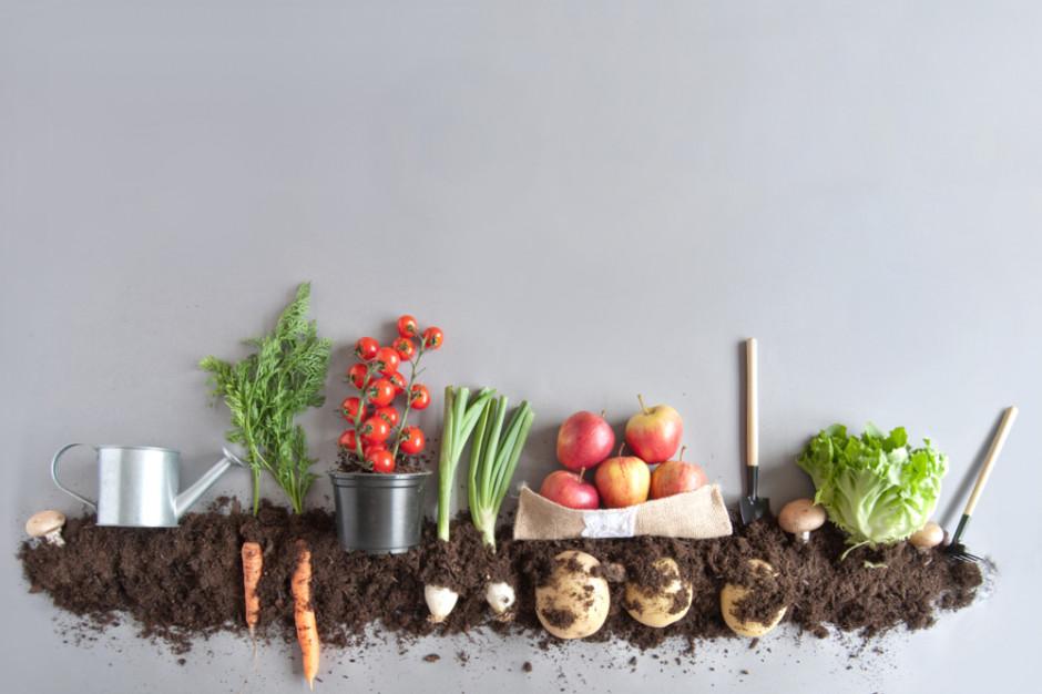IMAS Agri: Co czwarty Polak utożsamia BIO żywność z produktami kupowanymi od rolnika