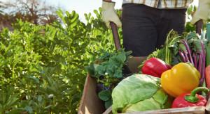 Carrefour wspiera polskie rolnictwo ekologiczne