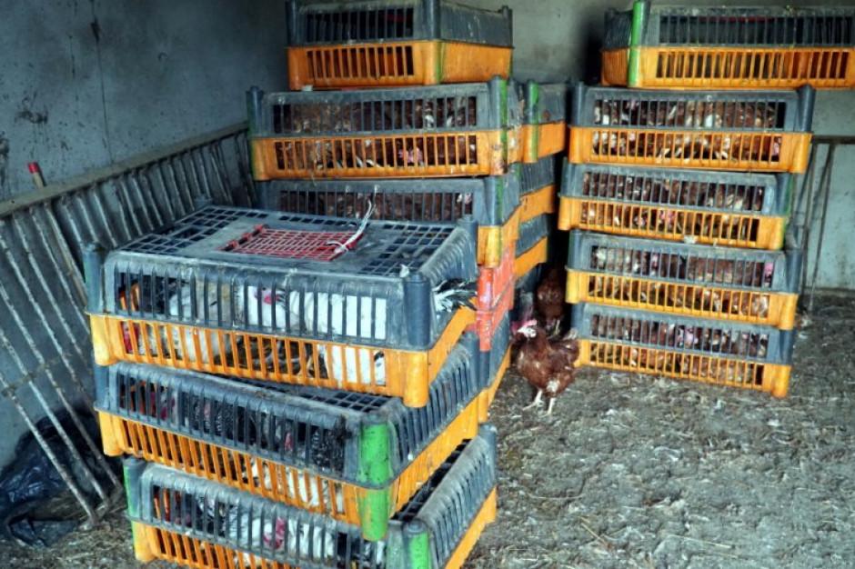 GIW: Nielegalny ubój drobiu na Mazowszu