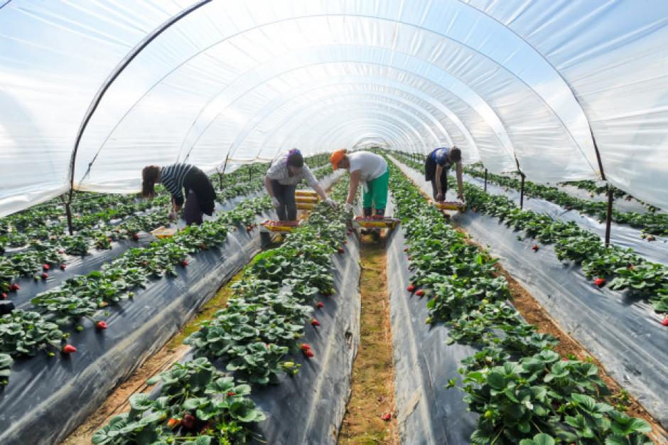 Brakuje pracowników. Czy Azjaci pomogą przy zbiorach owoców i warzyw?