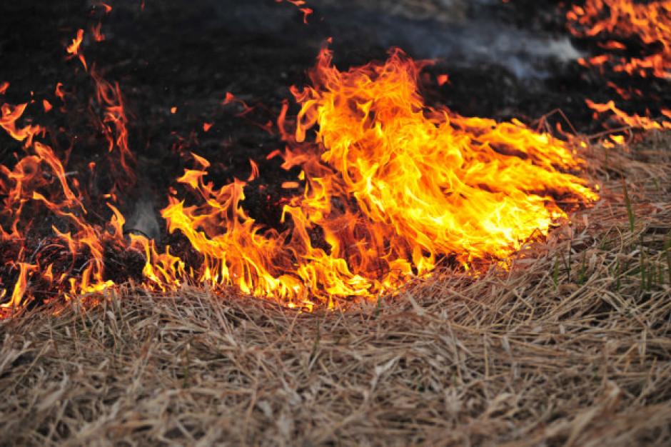 ARiMR: wypalanie traw grozi utratą dopłat