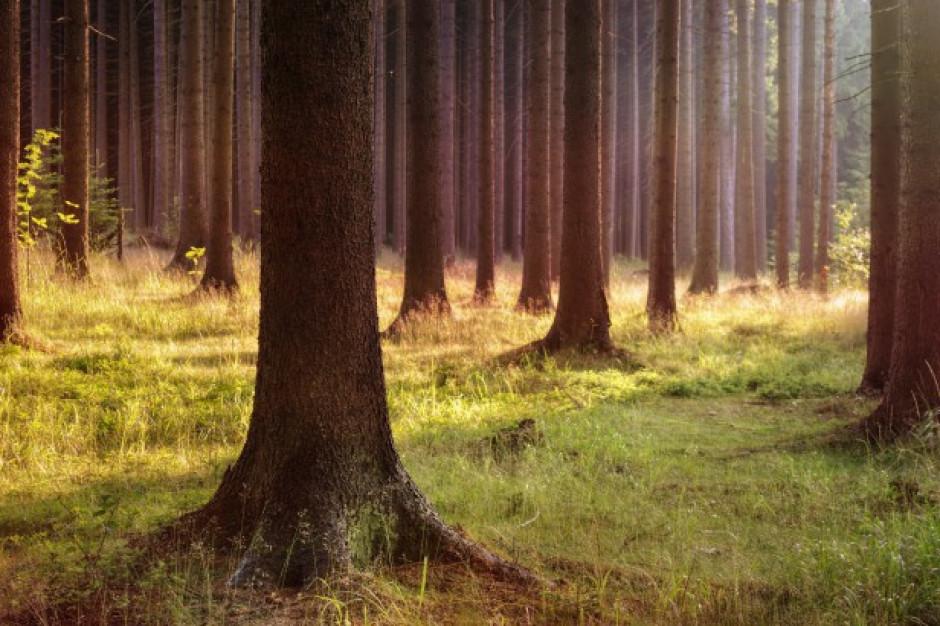 ARiMR: 2 maja rusza nabór wniosków na wsparcie inwestycji leśnych