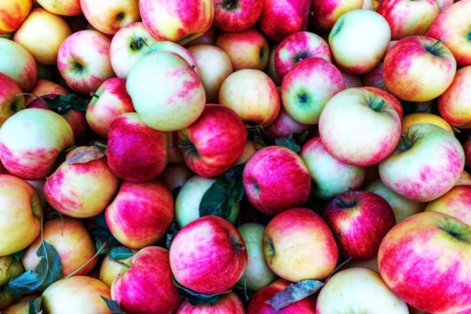 Rosja ogranicza import jabłek i gruszek z Białorusi