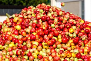 GUS: Polska zanotowała dodatnie saldo w handlu jabłkami w 2017 r.
