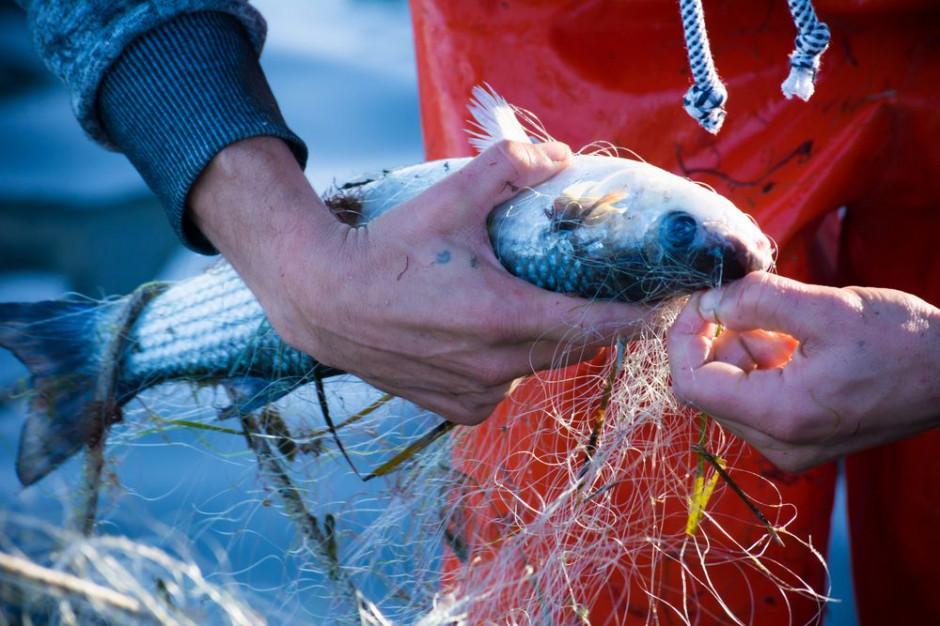 GUS: w 2018 r. mniejsze połowy ryb i bezkręgowców morskich
