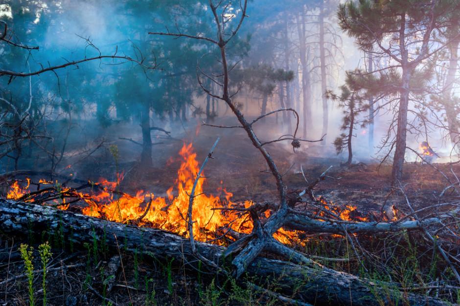Duże zagrożenie pożarowe w lasach w całej Polsce